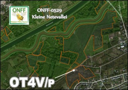 onff0529_001