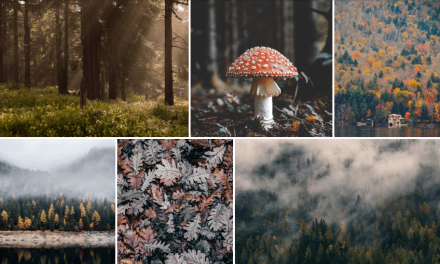 12+ Awesome React Photo Gallery Components