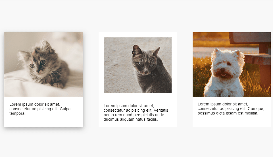 multiple card hover effect with css