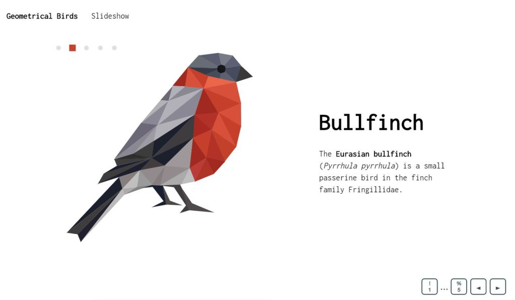 Geometrical Birds Amazing Slide show Concept