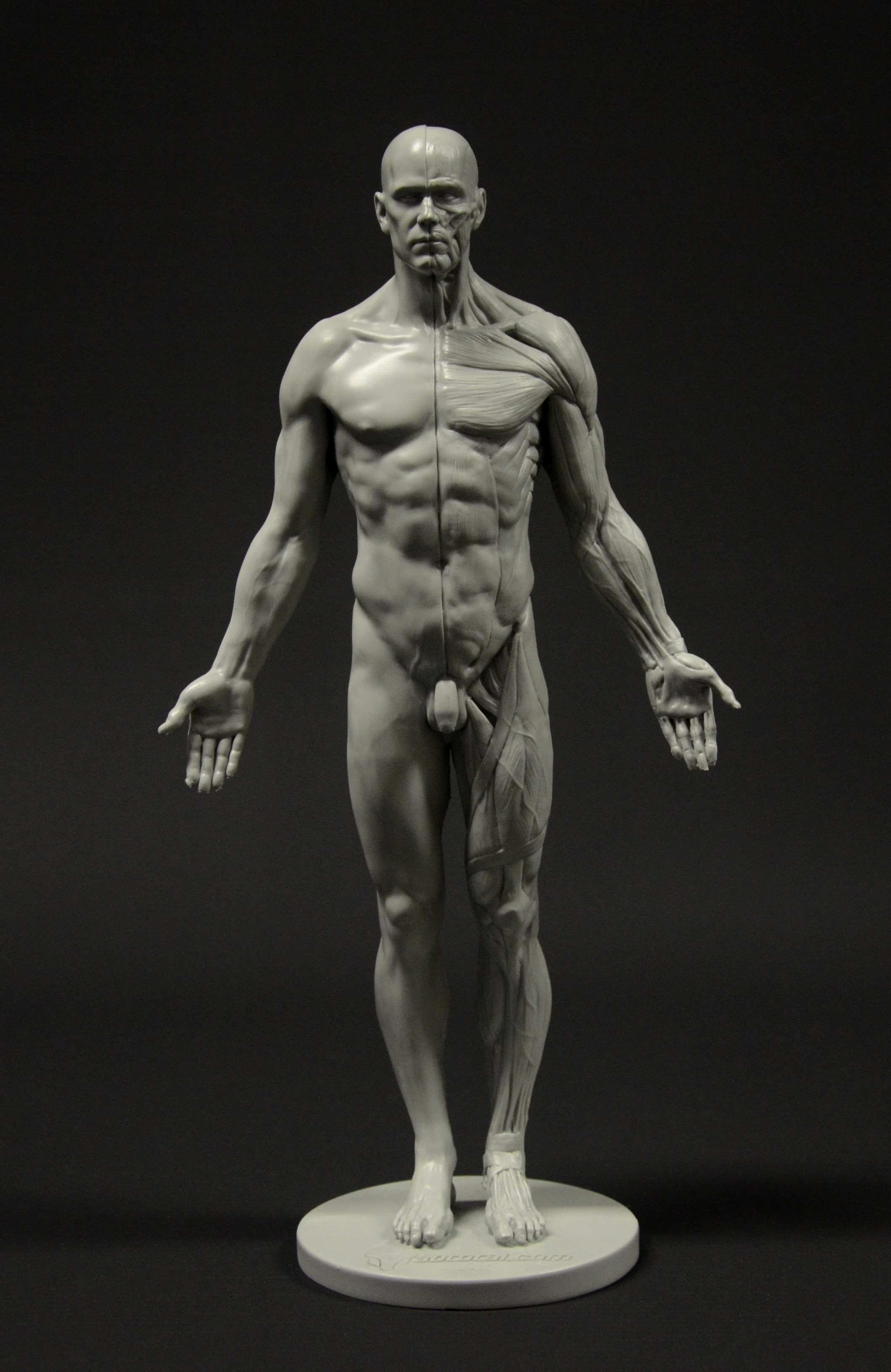 3D Total Anatomy Reference Casts  Review  On Animation