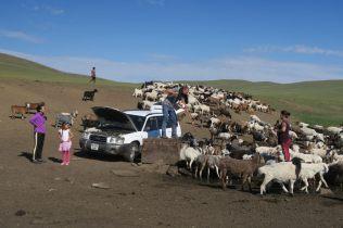 La pompe connectée à la batterie de la voiture permet d'alimenter le bétail