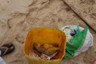 """Le poisson avant : La pêche du jour, un poisson appelé en sinhalais """"Parara"""" ou """"Pajara"""" (dont on n'a pas trouvé la traduction)"""