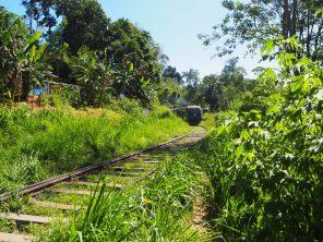 Route vers le Ella Rock, on laisse passer le train quand même