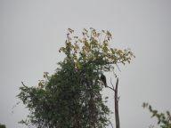 """De nombreux paons sauvages sont présents dans le parc, et rythment la journée de leurs cris particuliers, """"eonwwww"""", """"eonwwww"""" :)"""