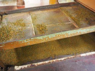 Séparation des différents grades de feuilles de thé