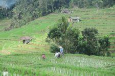 Paysans travaillant dans une parcelle