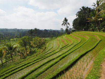 Impressionant travail de sculpture de la terre et d'irrigation