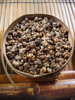 Déjections de luwak contenant des grains de café