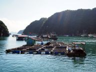 Une maison flottante. De nombreux éleveurs de poisson vivent littéralement dans la baie