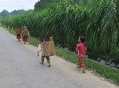 Des enfants, pieds nus, travaillant aux champs