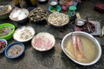 Les poissons sont stockés dans des bassines alimentées en air...