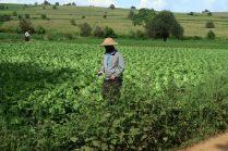 Un paysan moderne, le portable à la main