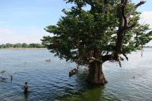 Les arbres ont les pieds sous l'eau avec la saison des pluies