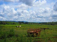 Une charrette locale dans un champs