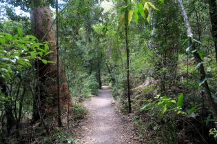 La forêt sub-tropicale