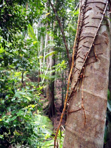 Gros plan sur la forêt tropicale qui pousse sur cette île de sable...