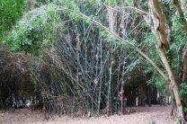 Dans le parc botanique de Rockhampton