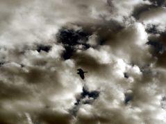 Un oiseau dans le ciel du jardin botanique
