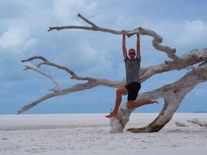 On s'amuse bien sur cet arbre !