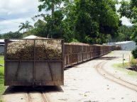 Les wagons chargés de carnne à sucre
