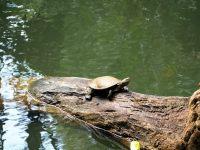 On a vu plein de tortues