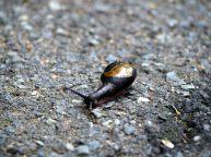 Un escargot à la coquille mystérieuse