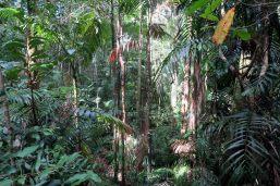 La forêt des gorges de Finch Hatton