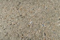 Et qu'est ce que c'est ? Des milliers de petits coquillages sur le sable !!