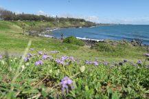 Des fleurs à Coral cove