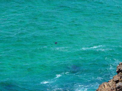 Ce point noir dans l'eau est une tortue !