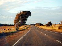 Un arbre couché sur la route