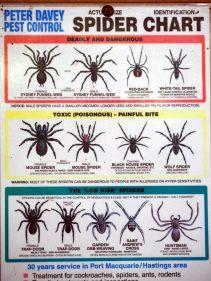 Attention aux araignées !
