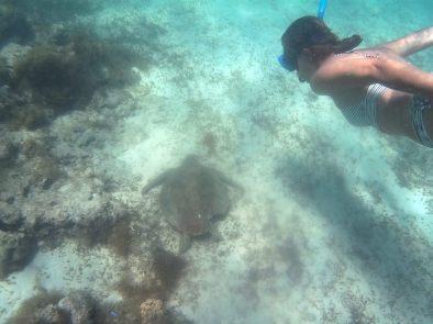 Elise plonge pour voir une tortue