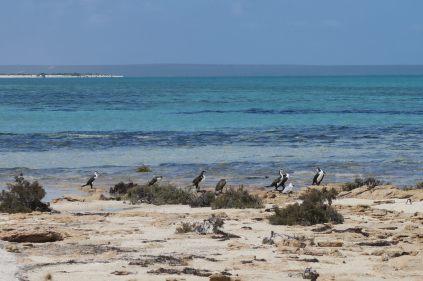 Des cormorans au bord de l'eau