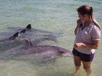 Des dauphins autour de la ranger qui donnait les explications