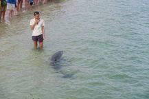 Dauphins et rangers se reconnaissent mutuellement... Les rangers observent la nageoire dorsale pour identifier les dauphins