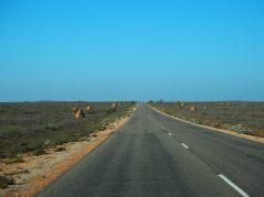 Sur la route vers Exmouth, termitières géantes