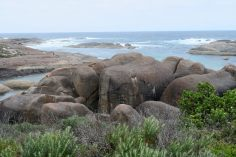 Elephant Pool, qui tire son nom de rochers en forme d'éléphants