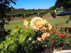 """Dans une """"winery"""" à Margaret River... Ils font les choses en grand avec jardin de rose, etc. Un peu pompeux"""