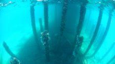 Vue pas tres nette du dessous de la jetée, avec les coraux sur les piliers
