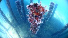 Détail pas très net des coraux sur les piliers