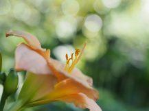Dans les jardins botaniques