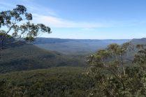 Les blues mountains, recouverts par une énorme forêt d'Eucalyptus