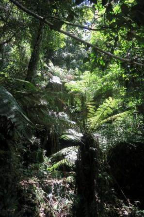 La forêt luxuriante