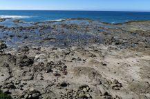 """La """"forêt fossilisée"""" de Curio bay"""