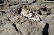 Détail d'un tronc d'arbre fossilisé
