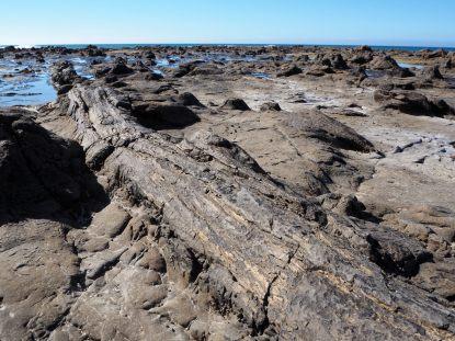 Tronc d'arbre fossilisé