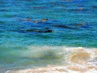 Une otarie sur la plage de Waipapa lighthouse