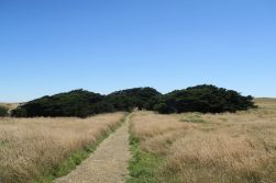 """Les restes de l'ancien """"village"""" près du phare, recouverts d'arbres couchés par le vent"""